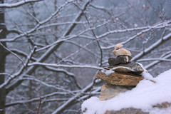 Little treasure (natural illusions) Tags: snow stones winter february pentax k200d dof branch tree slovenia europe lb1415 allrightsreserved white forest countryside closeup stack rural nature rawtherapee imagemagick zen balance stillness