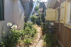 Petit chemin (lilacandhoney) Tags: france europe bicycle flowers flower sun windows home houses cute light moment memory green nature landscape scenery quartier natural grass day life cap ferret atmosphere colors