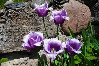 Spring Flowers (10)
