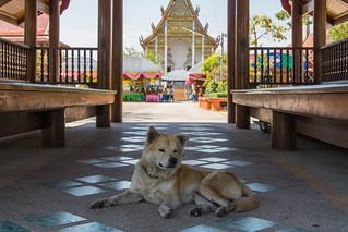 samut songkhram - thailande 43