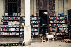 los guardianes de los libros (Loló Arias) Tags: cuba documental fotografia color reportaje