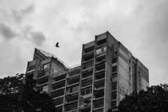 Zemun (D. Cassarino Photography) Tags: zemun building architecture blackandwhite blackwhite monochrome bird nostalgic belgrade serbia