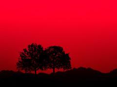 Sunsensation (Bruna Lazzarotti) Tags: tree illustration sunset crepusculo arvores silhouette silhueta nature sky red canon