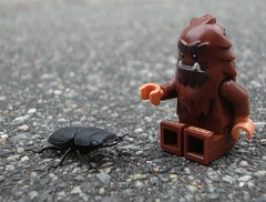 Hullo, whut are yu? (captain_joe) Tags: käfer beetle balkenschröter dorcusparallelipipedus lesserstagbeetle toy spielzeug 365toyproject lego series14 minifigure minifig bigfoot