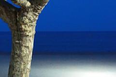 Le tronc, la mer, un soir... (Pi-F) Tags: arbre tronc horizon bleu ciel plage méditerranée côtedazur lumière soir lueur dégradé sable écorce texture platane provence