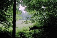Into the Woods at Loleta (joeldinda) Tags: 1999 tree forest kodak gold400 kodakpremiumprocessing98 woods pennsylvania marienville loletarecreationarea 2989 july states negatives minolta pointshoot film scanned onthisdate 204366
