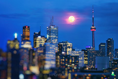 Strawberry Moon in Blue Dreams of Toronto (Katrin Ray) Tags: strawberrymooninbluedreamsoftoronto strawberrymoon micromoon moon 2017 june moonrising fullmoon clouds glow moonrise pink bluehour sky toronto ontario canada katrinray dreamscapesoftoronto canonphotography canon eos rebel t6i 750d tiltshift