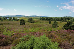 RSPB Arne (Roy Lowry) Tags: rspbarne heather heath purbeck purbeckhills