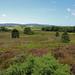 RSPB Arne (Roy Lowry) Tags: rspbarne heather heath purbeck purbeckhills