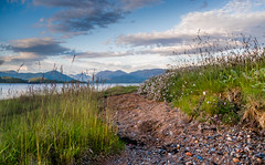 Loch pebbles, paths & wildflowers (Coisroux) Tags: loch pebbles rocks sand beaches grasses wildflowers path walkway lochs mountains bluesky creran scotlanddiscovered d5500 nikond stones
