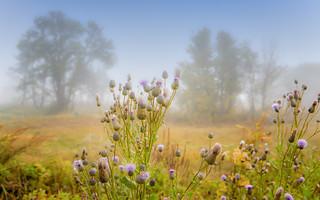 Foggy paysage