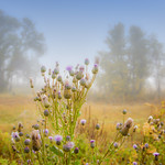 Foggy paysage thumbnail