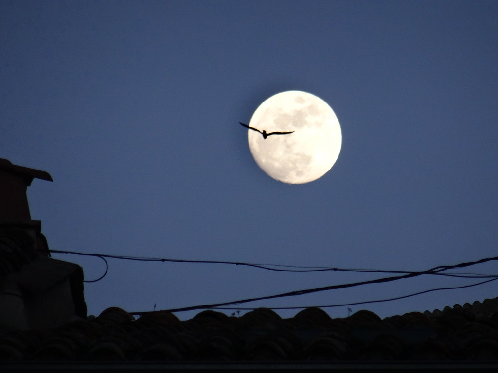 nasa night sky mezza luna - photo #31