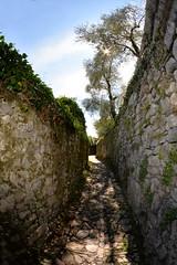 La vita stessa è un viaggio da fare a piedi. (illyphoto) Tags: vecchiaregina ossuccio photoilariaprovenzi sentiero