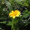 Yellow flower #yellowflower #flowers #yellow #nature #Indonesia #backtonature (lian.anzu) Tags: yellowflower nature yellow indonesia flowers backtonature