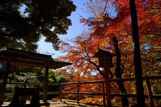 秋の等々力不動尊