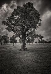 The Tree (Frodingham Photographer) Tags: austria engalm tree holiday2016 blackwhite