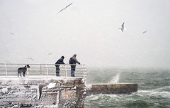sea life (photoksenia) Tags: ilce7m2 sony sea storm snow winter odessa ukraine water dog people