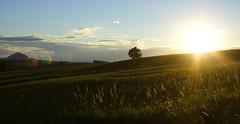 sunset (Florian.Schäfer) Tags: outdoor zeiss cy 35mm sunset