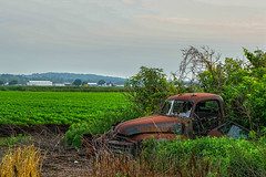 Retired in Holland Landing (JACK TOME) Tags: rust ontario truck old farm york region forgoten abandoned