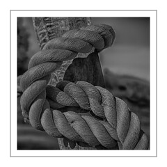 Knotted at Farmers Place (travellersteph) Tags: 2017 farmersplace freshwatercreek july vic