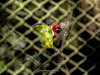 (Sarah Paparazzi) Tags: bird perfect people picture phography photograph perfeito praça park passeio world family aventure animal contrast city caminho desing estilo ensaio edição new reflection relaxation red
