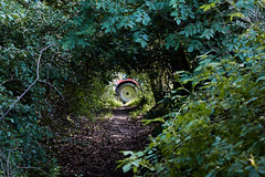 big beast crossing (scottprice16) Tags: england lancashire clitheroe trees leaves green tractor wheel red glimpse crossing path footpath summer july farm farming canon sigma canoneos60d sigma1835mmaf18 artseries