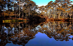 WINTER REFLECTIONS (Lani Elliott) Tags: nature naturephotography lanielliott water creek trees reflections reflection winter winterreflections blue brown light bright scene scenic view landscape scenictasmania australia tasmania gumtrees eucalyptustrees wow gorgeous