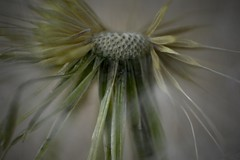 Me ;)) (Judit T) Tags: seeds wild nature plant brazil brasil