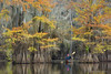 Touched by Autumn (Marsel van Oosten) Tags: to do usa louisiana texas atchafalayabasin cypress trees water lake reflections autumn fall colours color leafs squiver phototours tour workshop kayak paddling nature landscape serene calm adventure exploration remote wild wilderness unspoilt oneperson one travel
