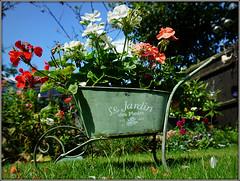 Le Jardin de Fleurs (Jason 87030) Tags: flowers garden planter wheelbarrow petals grass color colour jarin fleurs nice pretty summer july sony alpha a6000 ilce nex lens low composition pelargonium geranium