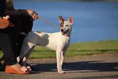 Observador (EXPLORE 22/07/17) (Sonia Carzino) Tags: cão dog perro rua