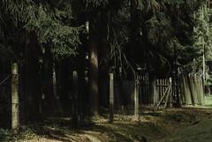 17.7.17_Jevany-5837 (Churechawa) Tags: williameggleston vintage urban unhappy trendy topography themed stylish style striking story stilllife stephenshore sorrowfull sad retro replichrome remarkable prague postmodern polaroid polacek poetry poetic photo original old newtopography neotopography mystery mysterious josefsudek jevany itf instituteofcreativephotography instituttvůrčífotografie influence improvisation idea churechawa graphic fujifilms5pro forest film feeling emotion detail decay decadent curious crossprocess creative countryside conceptual color atmosphere artistic art analog agfahdc200 czechrepublic
