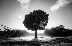 Kurrajong. (Skye Auer) Tags: tree frost winter kurrajong australia lone bw landscape farm