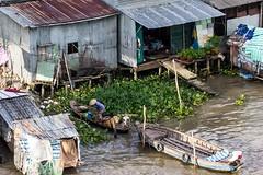 Říční domky v Cai Rang (zcesty) Tags: řeka vietnam2 loď dům domorodci vietnam cantho dosvěta cầnthơ vn
