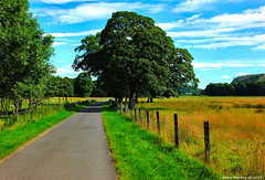 Scotland west coast Inverkip a nice countryside walk 24 July 2017 by Anne MacKay (Anne MacKay images of interest & wonder) Tags: scotland west coast inverkip nice countryside walk road fields trees xs1 24 july 2017 picture by anne mackay