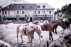 Caballos en Gavarnie (boni_villasirga) Tags: paisaje landscape pirineo pirineos pyrenees nature naturaleza hotel gavarnie caballo horse francia france mountain montaña