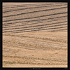 Convergence (Ilan Shacham) Tags: landscape abstract view scenic lines shape form converging fields field brown minimalism converge fineart fineartphotography half shfela israel