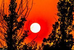 Endings can be beautiful ^^ (Baburam Bhattarai) Tags: sunset sunrise sun rise red tree sky abstract art dramatic forest light nature daejeon korea landscape