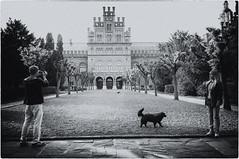 Selfiesless doggy life (-Visavis-) Tags: chernivtsi ukraine selfie dog bw chernivtsistateuniversity fujix100 finepixx100 35mm
