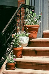 Potted Plants (C R Hoetzl) Tags: jerseycity hudsoncounty newjersey essexstjerseycity flowers