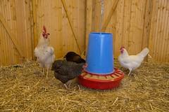 GoUrban_170727_Farm_009