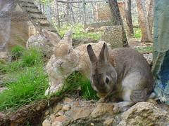 prima200442 (Protty coniglio nano) Tags: coniglio conigli protty bunny bunnies rabbit rabbits kaninchen lapin coniglietti coniglionano prottyit coniglinani oryctolagus oryctolaguscuniculus