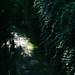 Jingshan Park: Hidden Trails