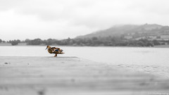 Loneliness (C.A.Photogenics) Tags: nature beautiful bw beacons brecon water wales walk exposure earth river day sky sony uk summer light life bird contrast colour portrait peaceful photographer photo lake artistic art a7rii angle animal hill