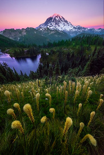 Twilight Light Shining On Beargrass On Mt Rainier