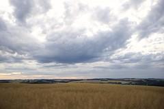 Neulich im Feld (DaLi-A) Tags: sachsen saxony feld field sommer summer getreide grain pentax k30 pentaxlife wolkig cloudy