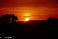 Sonnenuntergang / Sunset (R.O. - Fotografie) Tags: sunset nieheim nrw deutschland germany kreis höxter natur nature himmel sky wolken clouds bäume trees vögel birds panasonic lumix dmcfz1000 dmc fz1000 fz 1000 rofotografie sonnenuntergang