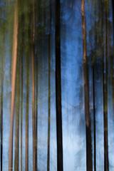 summer forest (sami kuosmanen) Tags: tuulos nature north europe suomi finland forest luonto light landscape long exposure etelä expression eerie metsä maisema photography puu pitkä valo valotus värikäs colorful creative art taivas tree trees bokeh blue blur pine mänty liike movement intentional camera canon