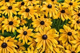 A burst of floral sunshine..